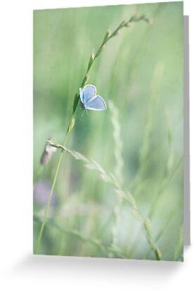 blue wings by Priska Wettstein