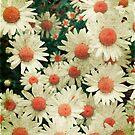 Summer Daisies by Aimee Stewart