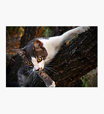 CAT CLIMBING TREE Photographic Print