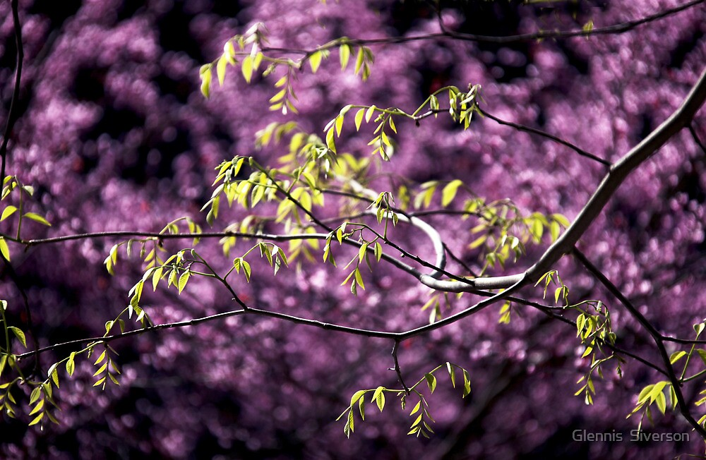 Branches by Glennis  Siverson