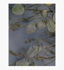 pause and reflect Photographic Print
