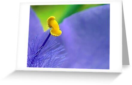 One Single Stamen: Spiderwort by paintingsheep