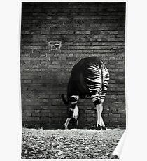 Okapi Poster