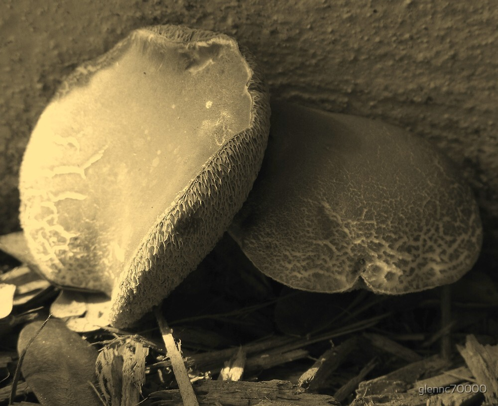 Mushrooms in Sepia - South Florida by glennc70000
