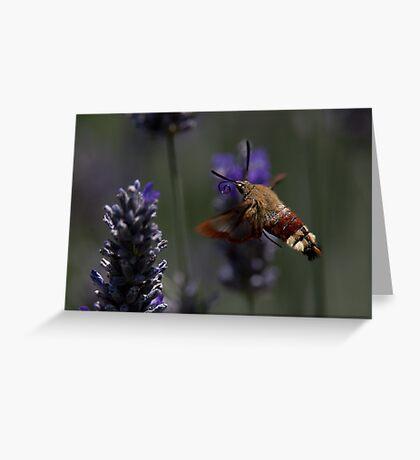 Broad-bordered Bee Hawkmoth 2 Greeting Card
