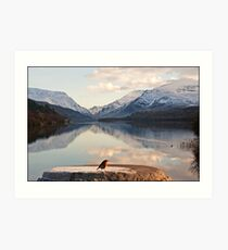 From a robin's point of view Snowdonia Wales Art Print