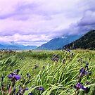Wild Iris of Alaska by Carolyn Staut