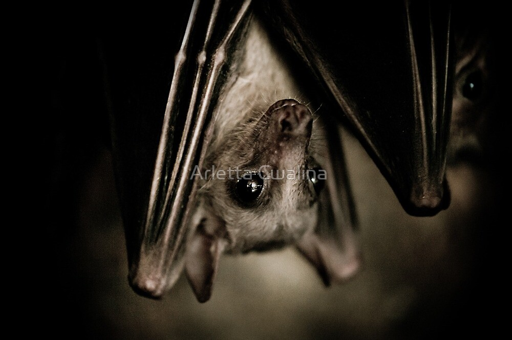 Single bat hanging portrait by Arletta Cwalina