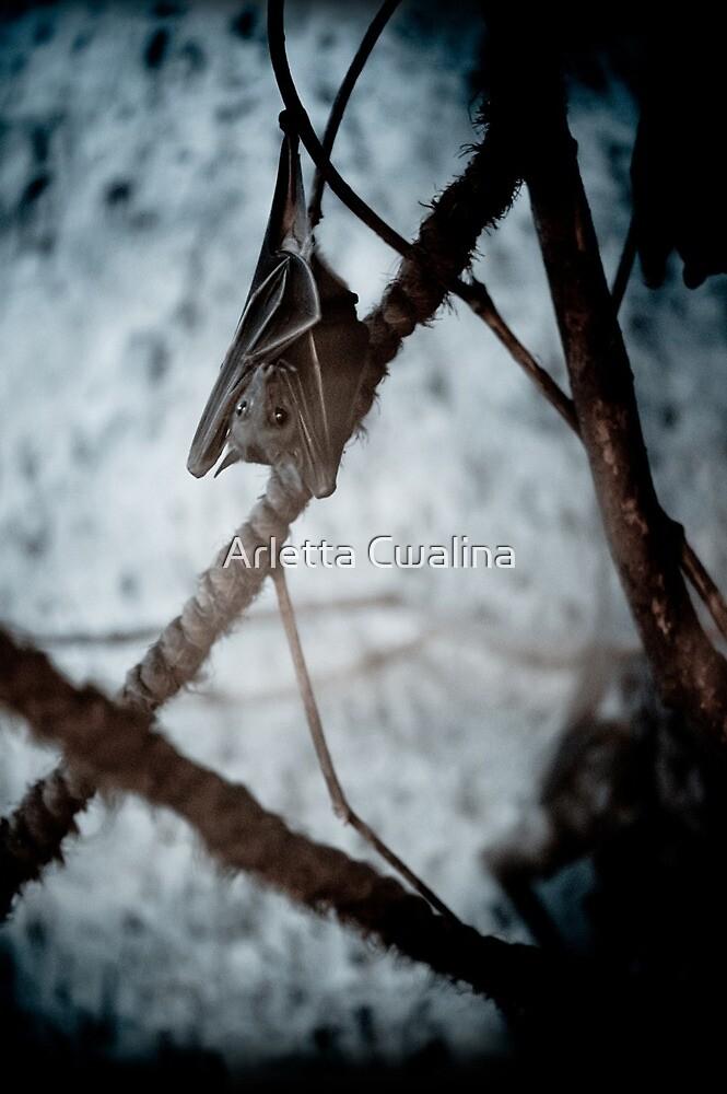 Single bat hanging alone by Arletta Cwalina