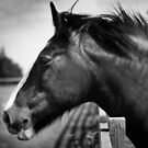Stare of the Horse. by lendale