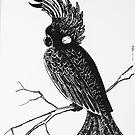 Black Cockatoo by Miesha