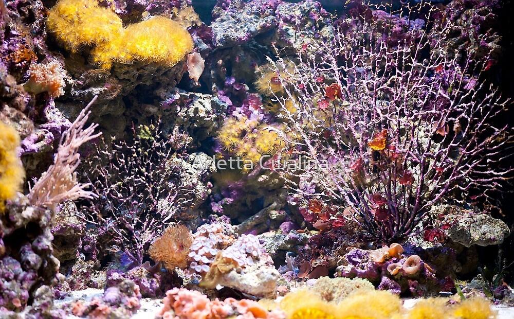 Coral reef aquarium by Arletta Cwalina
