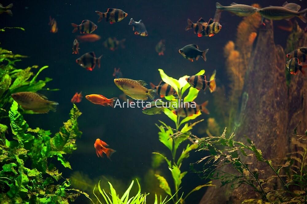 Aquarium fish group in zoo by Arletta Cwalina