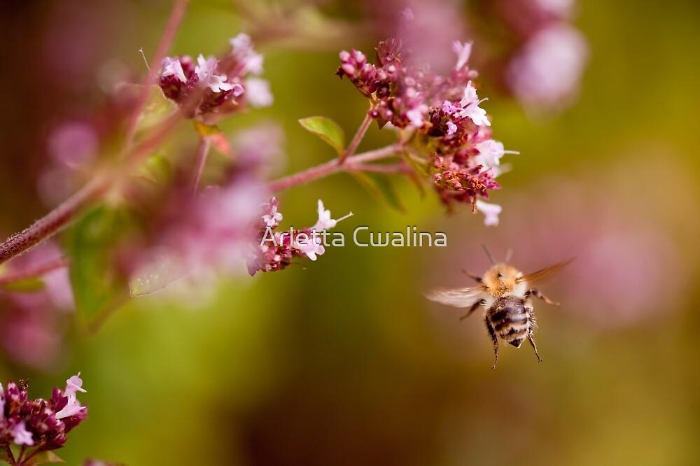 Flying bumblebee taking nectar by Arletta Cwalina