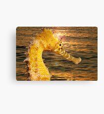 Sea Horse sun rise Canvas Print