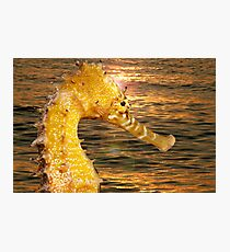 Sea Horse sun rise Photographic Print