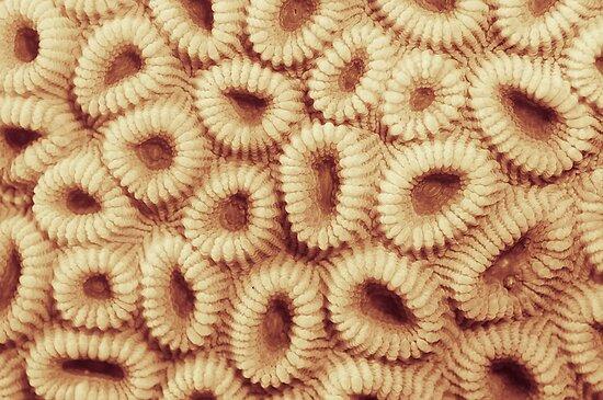 Hoops coral by JonMilnes