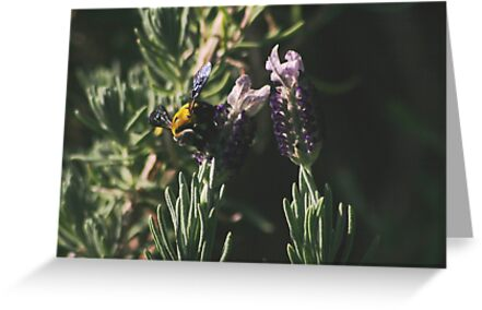 Giant Bee Gathering Nectar by Rodney Fagan