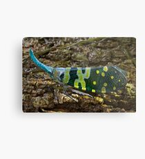 Blue-horned bug, Thailand Metal Print