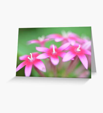 Pink Pentas Greeting Card