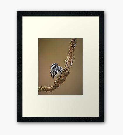Black & White Warbler Framed Print