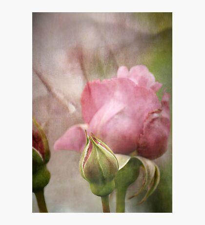 Go Softly  Photographic Print