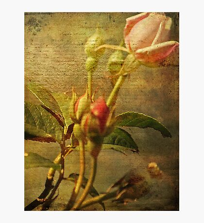 ~ Love Letters ~ Photographic Print