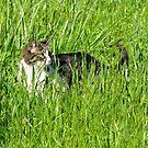 Sneaking Cat in a Field by carls121