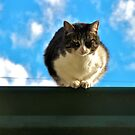 Vulture Cat on a Roof by carls121