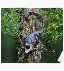 Baby Alligator says OPEN WIDE Poster