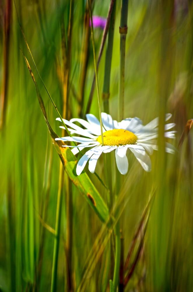 White Flower in the brush by Artc2011
