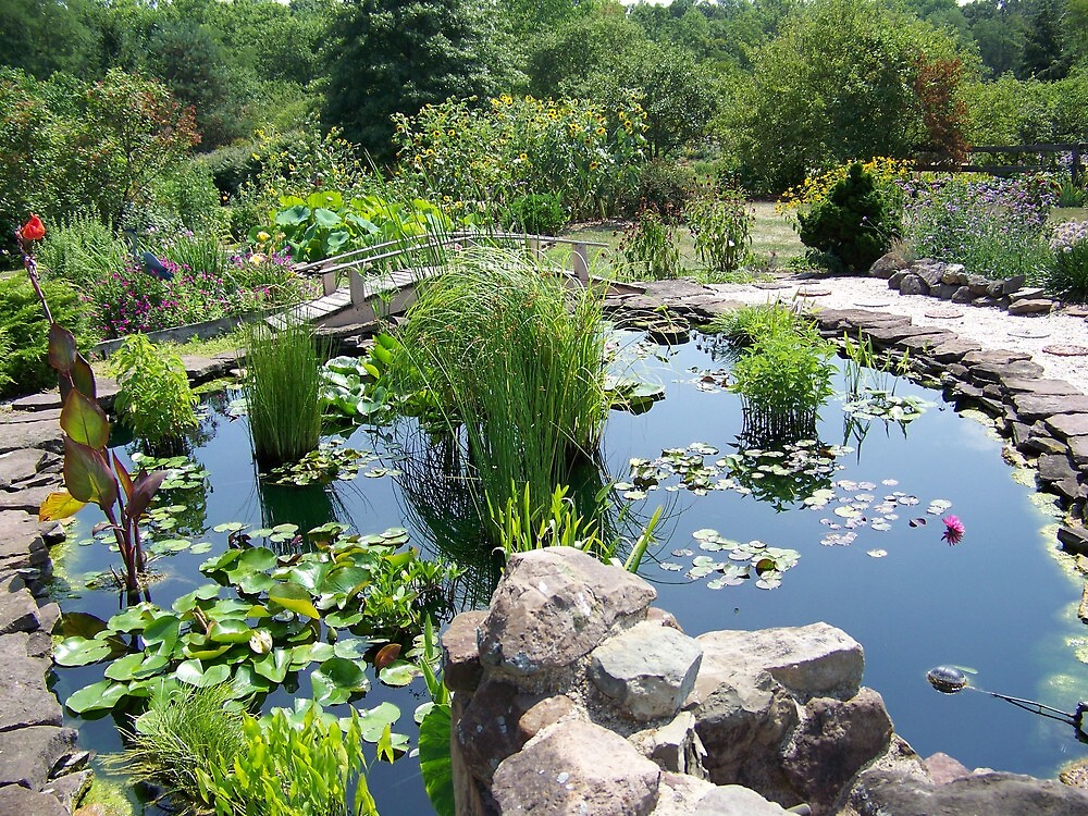 Lily Pond at the Frey Farm by Kerry Miller