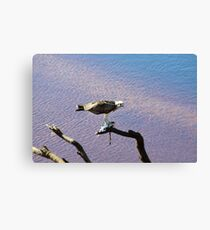 Successful Fishing Canvas Print