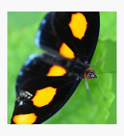 Orange Shoemaker Butterfly Photographic Print
