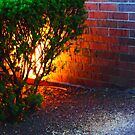 Burning Bush by Piper Patterson