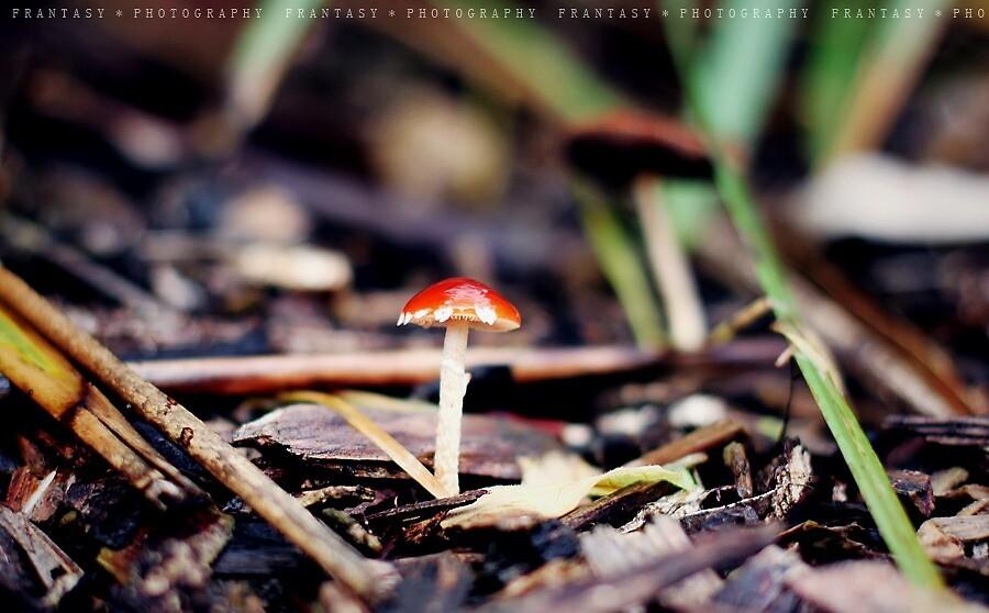 Little mushroon by fRantasy