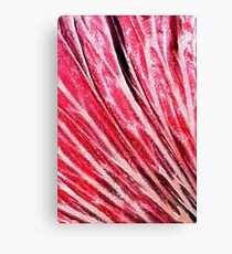 Confectionery Pinks Canvas Print