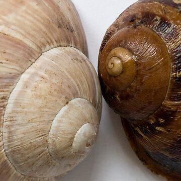 Shells by cherryannette