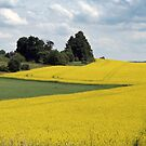 Pathway in rapeseed field by Antanas