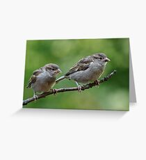 Fledgling house sparrows Greeting Card