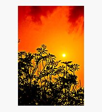 Red Cloud Sunset Photographic Print