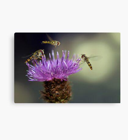 Hoverflies Canvas Print