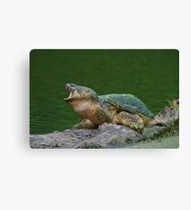 Holy Snapper! Canvas Print