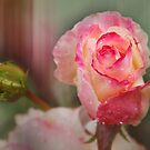 Raindrops On Roses by Eve Parry
