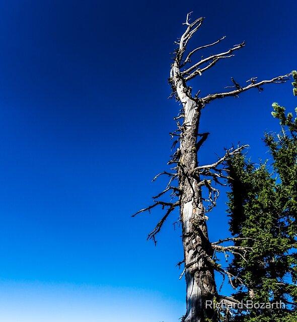 Crater Lake #113 by Richard Bozarth