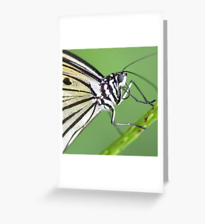 """""""Smiley"""" - A Paperkite Butterfly Greeting Card"""