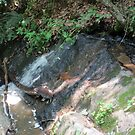 Small Water Fall by Cathy Cale