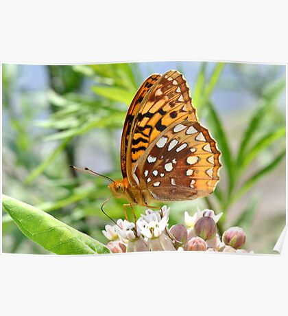 Great Spangled Fritillary. Poster