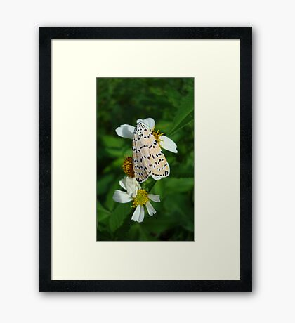 "So delightfully ""bella""!  The beautiful Ornate Bella Moth Framed Print"
