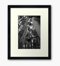 Tall Timber Framed Print